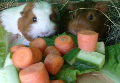 Les légumes : infos générales