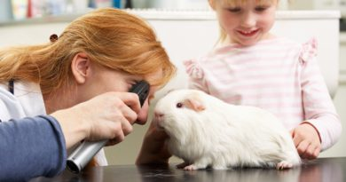 Trouver un bon vétérinaire