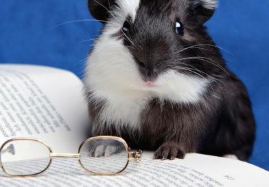 Sources et Références Bibliographiques