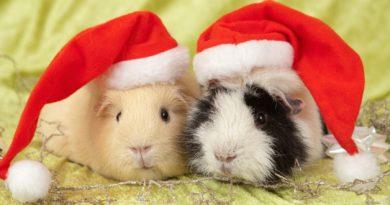 Des cadeaux de Noël pour vos cobayes !